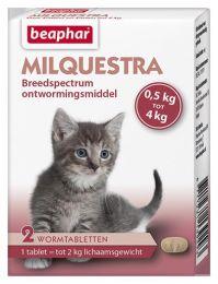 158103929_milquestra_kitten_kat.jpg