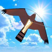 284605176_Black_Hawk_7meter.jpg